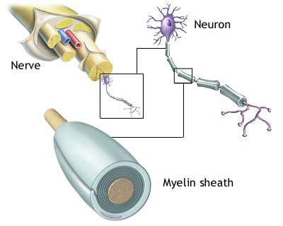 practice_theories_myelin2