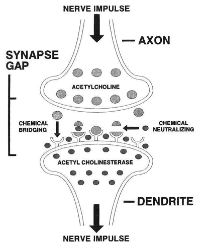 practice_theories_synapse